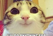 Funny pictures / Cats, girls, kids, animals... and much more... / by Funny Pics