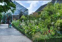 Impressie / Overview Hortus botanicus Leiden