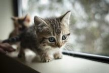 Cute Animals / Sharing the cutest animals you'll ever see!