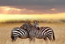nothing as beautiful as wildlife!!!