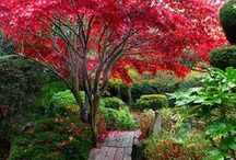 Landscaping with Trees / Landscape design featuring trees
