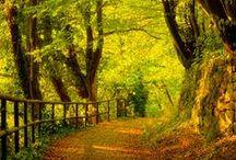 Erdő, mező