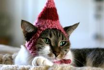 Cat-itos