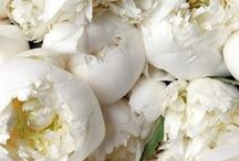 - Floral -  / Stunning photography of flowers and floral arrangements.
