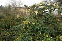 le piante del nostro giardino