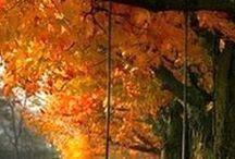 Autumn / Syksyä