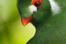 Madárles./Birds. / SzÍnes madarak.