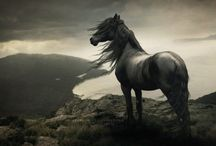 horses / A Impressing anmimal