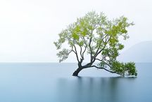 Lake Wanaka / Different ways to photograph a tree
