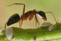 thema mieren