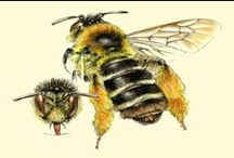 thema bijen