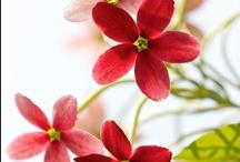 Hana (Flowers) / by Masala Chai