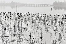 Kumori (Cloudy) / by Masala Chai