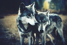 Wolves / by Jessica Zimmerman