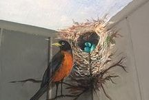 Feathers, Birds & Nests