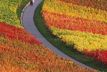 Colors of Autumn / by Marlen Maya Velez