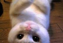 Kitty, kitty caat :D