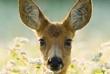 Oh deer! :)