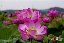 Nature / photonews