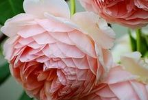 Flora / by Jacquie Rhoades