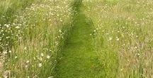 Meadow / Meadow
