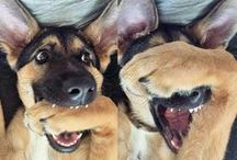 Koty Psy i inne Zwierzątka / Świat Zwierząt oczami Człowieka