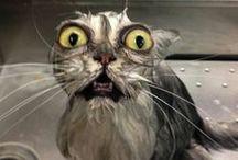 Wet Cats / Wet Cats