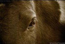 Horse Photography / Photography by Daniel Quat http://danielquatphoto.com/horse-photography/
