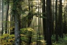 Woodland Enchantment / I am so in love with every inspiration found in a woodland enchantment.