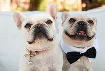 "Pets in Weddings / Want to include your pet in the ""best Day Ever"" festivities?  From engagement and save the date photos to your pet down the aisle or standing up with you, get inspired for a pet friendly wedding."