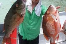 Belize Fishing vacations At Hatchet Caye resort! / At our Belize island resort, we have great year-round fly-fishing, bottom fishing, and trolling. We are located minutes away from the Belize Barrier Reef, home to a vast species of fish and other marine life. http://hatchetcaye.com/belize-fishing-package/