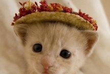 Sandy B--Cats in Hats, Sweaters,Ribbons, Scarves, and what have you! / So sweet! / by Sandra Belisle