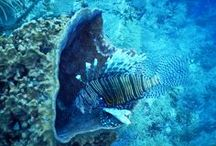 Belize Dive Tours - (Belize Barrier Reef, Whale Sharks, Atolls, Sea Turtles) - Hatchet Caye Resort. / Here at Hatchet Caye Resort, you are only minutes from some of the best diving in Belize and the world. We offer custom diving experiences for individuals and groups. http://hatchetcaye.com/belize-scuba-diving/