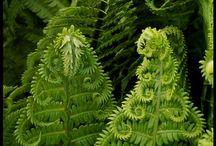 D R E A M G A R D E N / Inspiration och idéer för att skapa min drömträdgård.