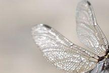 The Fairies / T H E R E    A R E    M O N S T E R S    I N    T H E S E    W O O D S