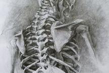 Human Body Drawings (Anatomy)