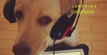 CUTE TECHY CRITTERS / A fun look at animals with their headphones