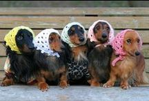 !! Doggie Dogs !! / Anything that showcases the beauty and wonderful nature of dogs / by J Cooper