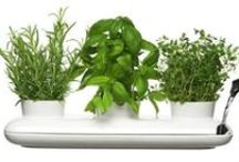 Herb Planters / Some trendy herb planters for all the foodies out there.