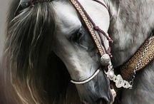 hello my horse