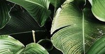 Plants / beautiful plants of all types.