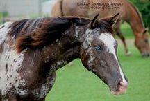 Awesome Horses / by Tonya Noel