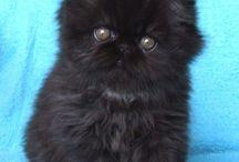 Gatos / Fotos giras de gatinhos