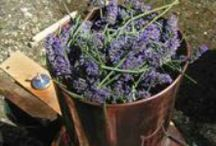 Recipes / Recipes & Tips for the distillation of hydrosols & essential oils & alcohol.