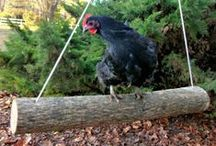 morrolo to print chicken coop / mr morrollo s chicken coop we are currently building