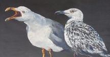 Oiseaux / Oiseaux, Goëlands, Macareux, Photos, Peintures, Dessins