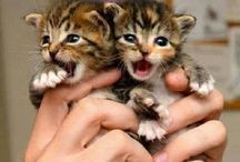Cats and Kittens / Super cute cats and kittens. Kitties are just too damn cute!