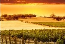 Paysages viticoles  / Retrouvez dans ce tableau de magnifiques paysages viticoles