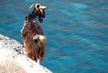 Experience Crete / Culture, History, Cuisine, Cities, Villages, Beaches, Tradition, People, and more..
