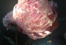 interior flower